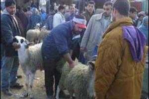 المغرب موطنون يقترضون وآخرون يبيعون thumb_01289817847.jpg